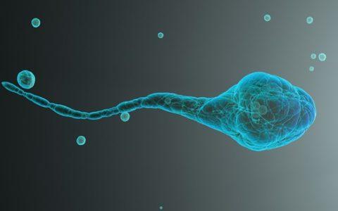 Espermatozoides de ratón enviados al espacio producen bebés sanos en FIV.