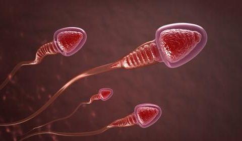 ¿Qué causa la infertilidad masculina? Células espermáticas con mal genes, mencionan los investigadores.