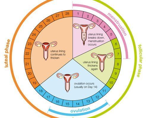Calcular la fecha de ovulación: ¿cuáles son los días más fértiles para lograr el embarazo?