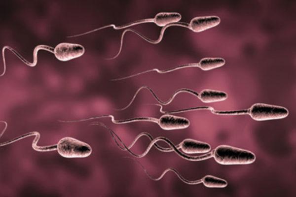 El espermograma, la prueba que determina la fertilidad masculina…