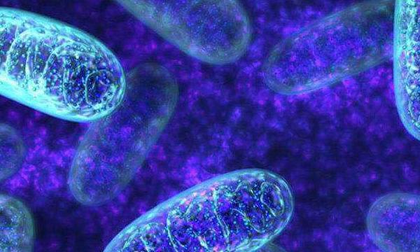 Los precios para los  programas de donación de mitocondrias hasta el 1 de agosto son 6.900 y 9.900 euros. A partir del 1 de agosto  el precio se aumenta  y será  9.900 y 14.900 euros.